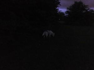 Hund_I_Mørke